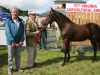 Champion Colt Foal winner was Michael Dooner (Athlone) with Luke Smith (Tile Depot, Ballyjamesduff)