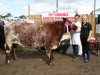 Champion Shorthorn winner was Lisa Dowd (Galway) with sponsor Gráinne Duffy (Eirgrid)