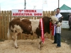 Champion Simmental winner