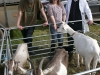 Winner in the Goats section was Fiona Wall with Justin Jewel and steward Oliver O`Reilly