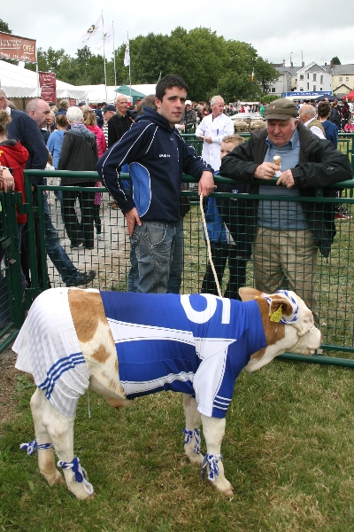 `Pajo` the Cavan calf at Virginia Show with Alan Sheridan (Lough Egish)