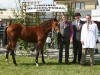 Champion Foal was won by Gordan Drury (Cootehill) with judge Pat Hoare and steward Peter Brady