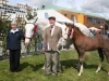 Champion Irish Draught Mare was won by Noeleen and James Heery (Dublin)