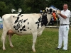 Reserve Champion Dairy was won by Tom Kelly (showing by Alan Derian
