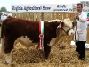 Champion Hereford winner as Virginia Show was Gary Mckiernan (Corlismore)