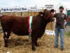 Champion Shorthorn winner at Virginia Show was Patrick (and Noel) Brady (Grousehall)