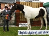 Susan Traynor won Best Coloured Pony at Virginia Show