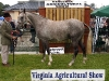 Martin Moore (Mullagh)
