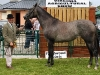 2yr Old Filly winner at Virginia Show was Martin Moore (Mullagh)