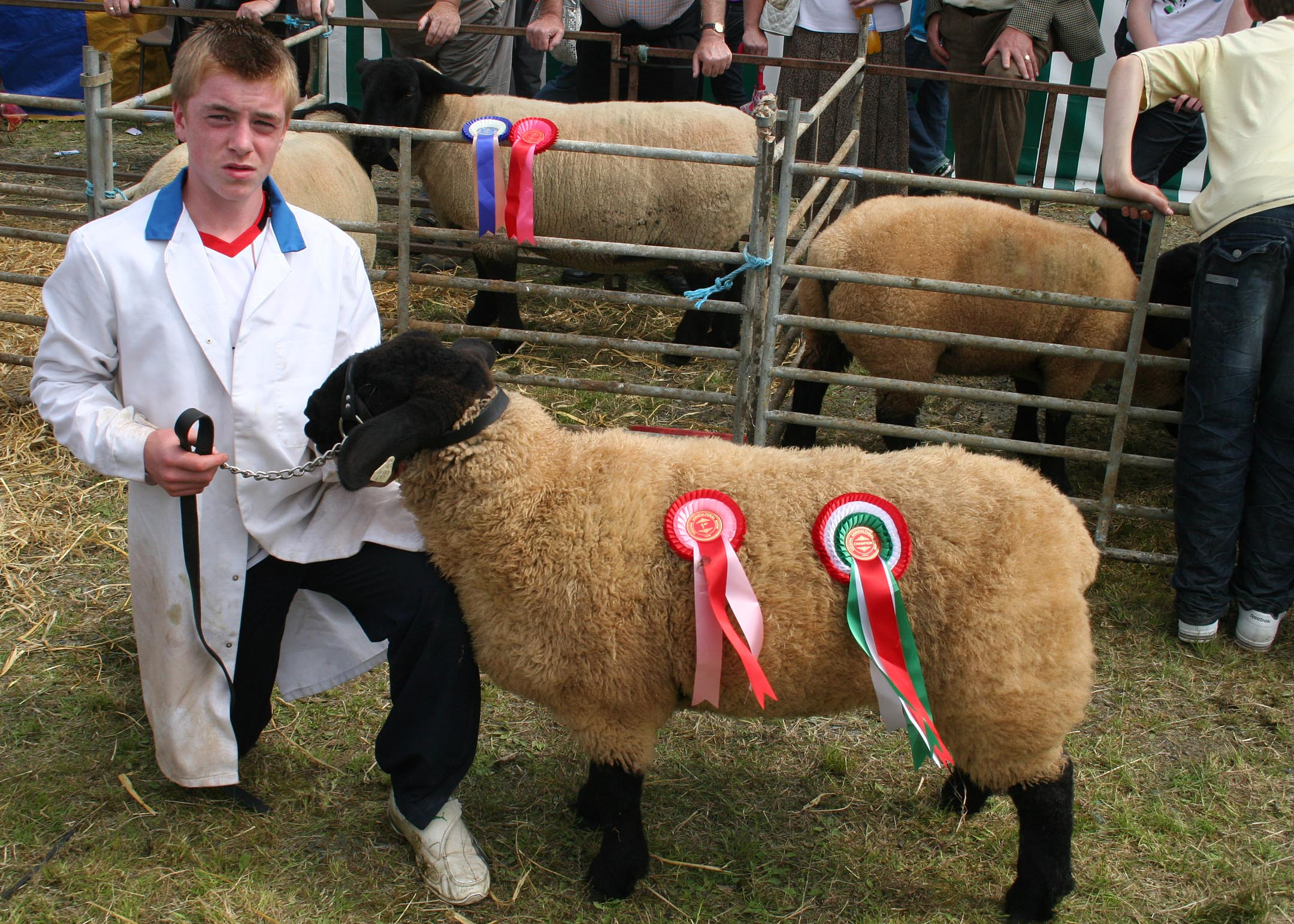 Ryan Farrelly (Castlerahan) with his Over-all Suffolk Champion and his winning Suffolk Ewe Lamb at Virginia Show