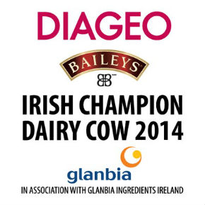 Diageo Baileys Irish Cow square box